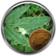 Epimedium Extract Ingredient Definition