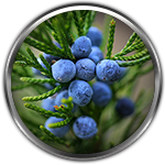 juniper berry ingredient definition