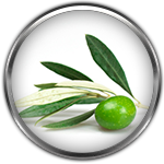 olive leaf ingredient definition